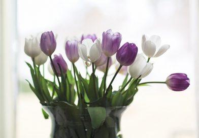 Kayışdağı Lale Çiçek Hizmeti
